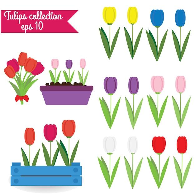 Tulpen collectie Premium Vector
