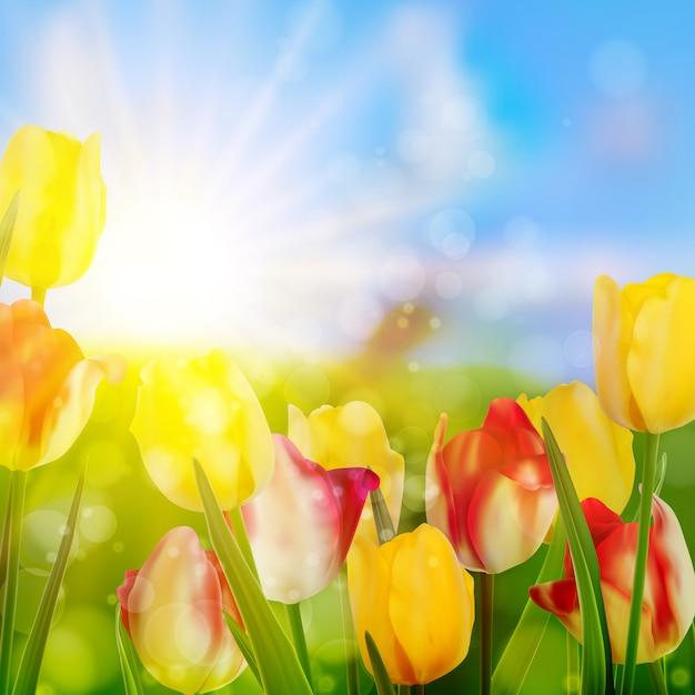 Tulpen die in tuin op groen groeien. Premium Vector