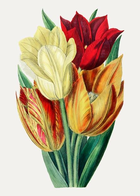 Tulpen in warme kleuren Gratis Vector