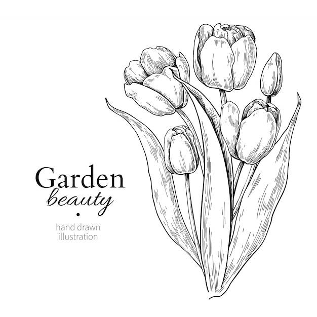 Tulpenbloem en bladerenboeketekening Premium Vector