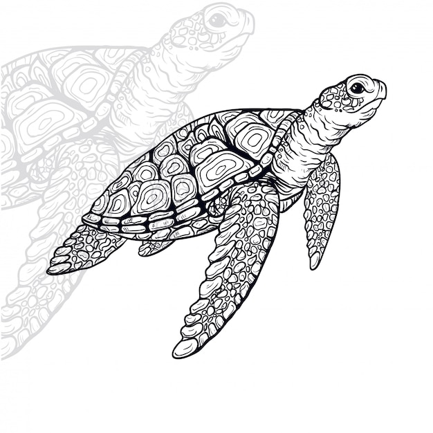 Turtle vector illustratie Premium Vector