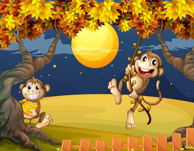 Twee apen die zich midden in de nacht afvragen Gratis Vector