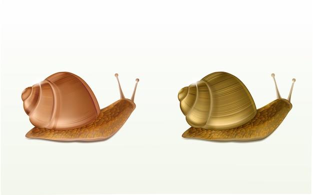 Twee kruipende bourgondië of roman slakken 3d vectorpictogrammen die op witte achtergrond worden geïsoleerd Gratis Vector