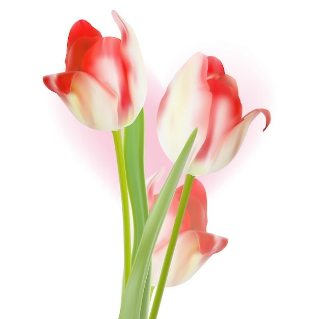 Valentijnsdag sjabloonontwerp tulpen. Premium Vector