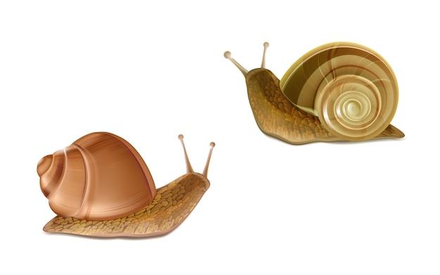 Vector 3d realistische twee kruipende bourgondische of romeinse slakken. franse keuken delicatessen, eetbare en f Gratis Vector