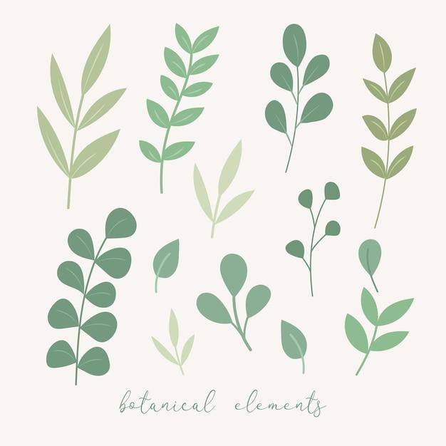 Vector botanische decoratie-elementen. floral bladeren set. Premium Vector