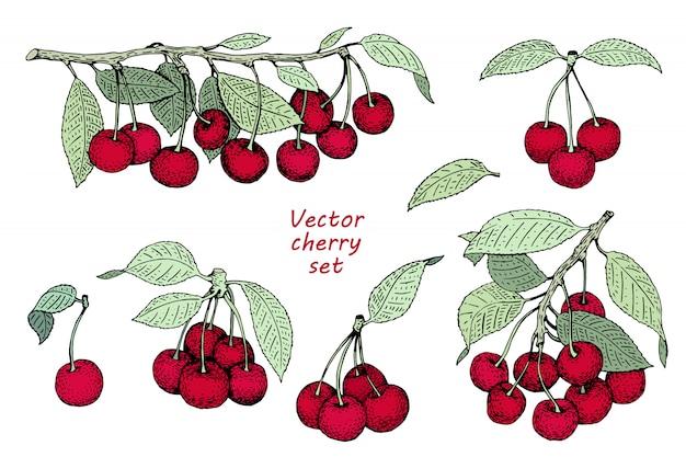 Vector cherry logo sjabloon. kan gebruik voor achtergrond, ontwerp, uitnodiging, banner, dekking zijn. retro hand getrokken illustraties Premium Vector