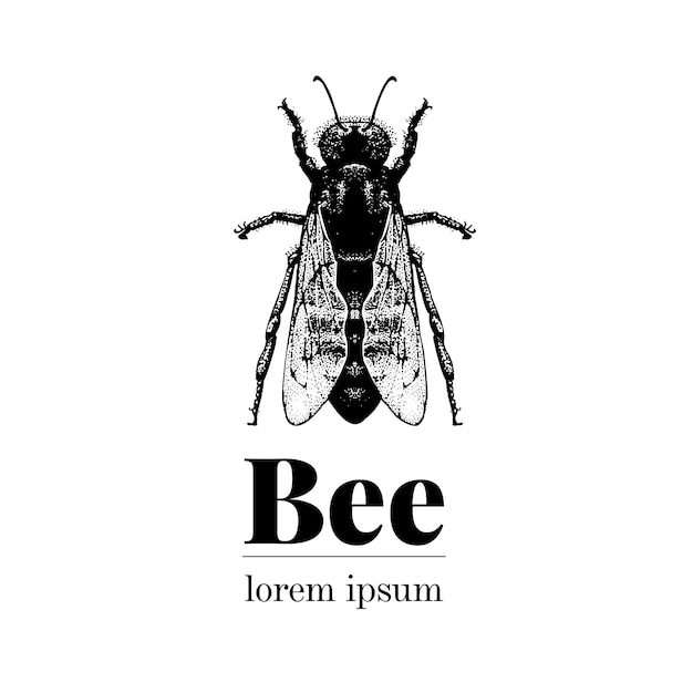 Vector hand getekend bee illustratie. retro-stijl logo sjabloon. Premium Vector