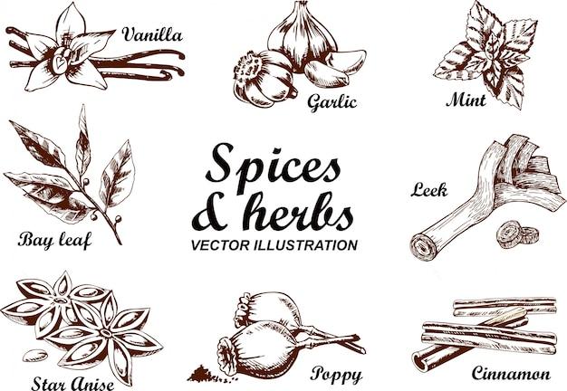 Vector hand getrokken set met culinaire kruiden en specerijen. schets illustratie Premium Vector