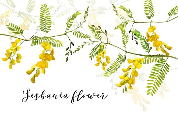 Vector illustratie van sesbania-bloem Premium Vector