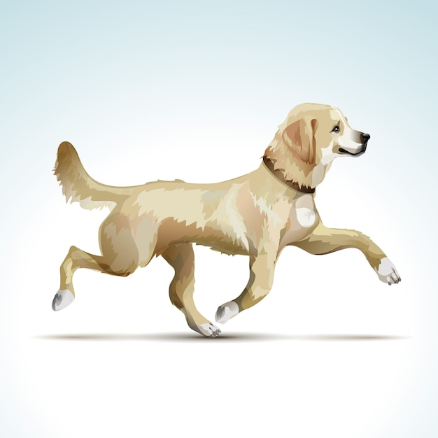 Vector labrador retriever hond Premium Vector