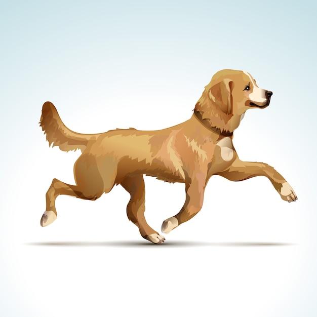 Vector labrador retriever hond Premium Vector