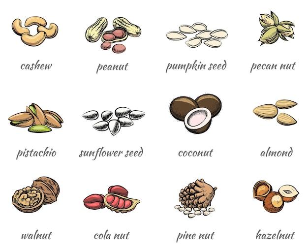 Vector noten set. voedsel pinda en hazelnoot, zaad en walnoot, amandel en pistache Gratis Vector