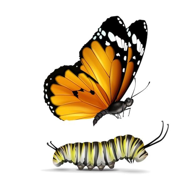 Vector realistische plain tiger of afrikaanse monarch vlinder en rups close-up zijaanzicht geïsoleerd op een witte achtergrond Gratis Vector