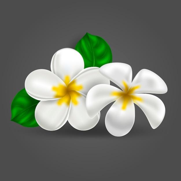 Vector realistische tropische hawaiiaanse bloemplumeria Premium Vector