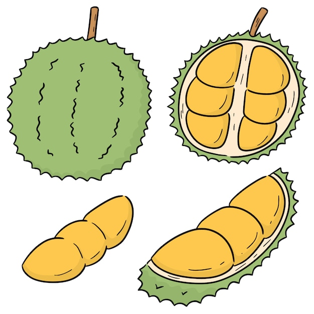 Vector set van durian Premium Vector