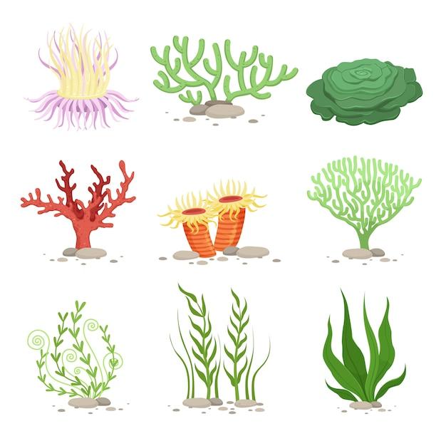 Vector set van onderwater planten Premium Vector