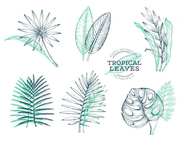 Vector set van tropische bladeren. Premium Vector