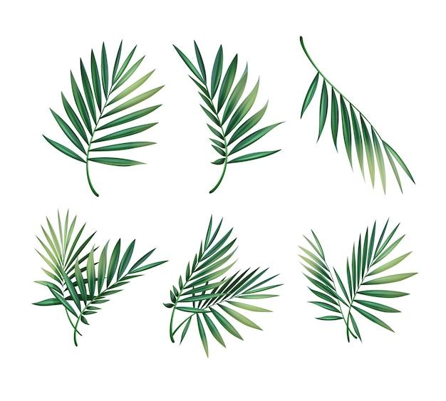 Vector set van verschillende groene tropische palmbladeren geïsoleerd op een witte achtergrond Gratis Vector