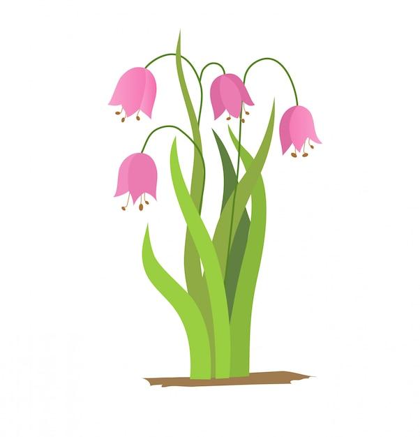 Vector tekening bell bloemen, geïsoleerde floral element, hand getrokken botanische illustratie Premium Vector