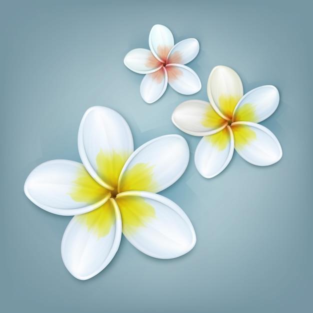 Vector tropische plant plumeria of frangipani bloemen geïsoleerd op blauwe achtergrond Gratis Vector
