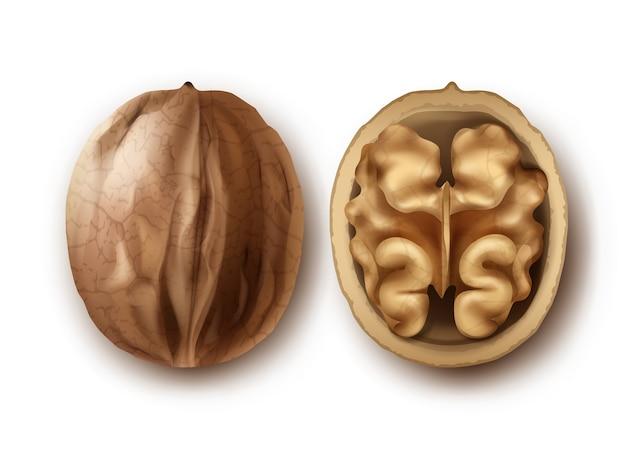 Vector twee hele en gebarsten walnoten close-up zijaanzicht geïsoleerd op een witte achtergrond Gratis Vector