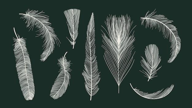 Vector vogel veren collectie Premium Vector