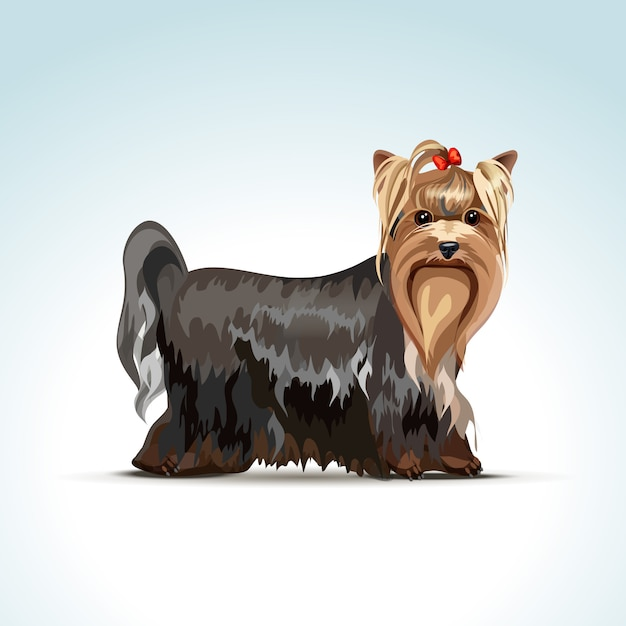 Vector yorkshire terrier dog Premium Vector