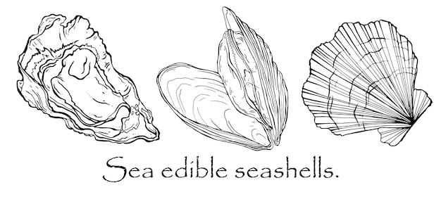 Vector zwart-wit patroon van zeeschelpen, mosselen, kammossel Premium Vector