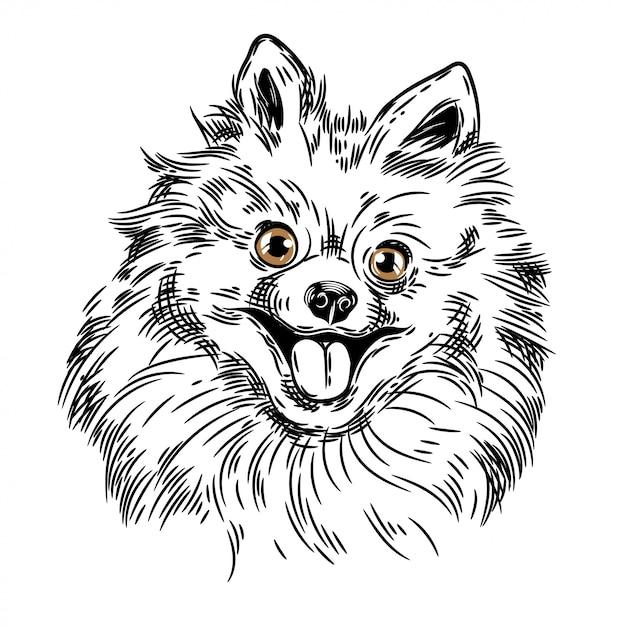 Vectorbeeld van een pomeranianhond Premium Vector