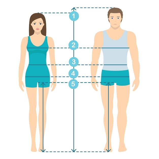 Vectorillustratie van man en vrouwen in volledige lengte met metingslijnen van lichaamsparameters. man en vrouw maten metingen. menselijke lichaamsafmetingen en verhoudingen. plat ontwerp. Premium Vector