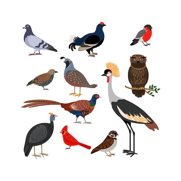 Vectorvogel geïsoleerde pictogrammen Premium Vector