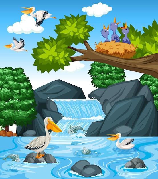 Veel bruine pelikanen in de watervalscène Gratis Vector