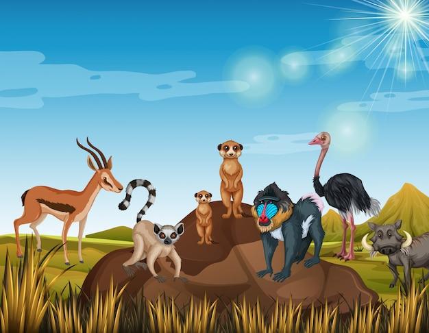 Veel dieren staan in het veld Gratis Vector