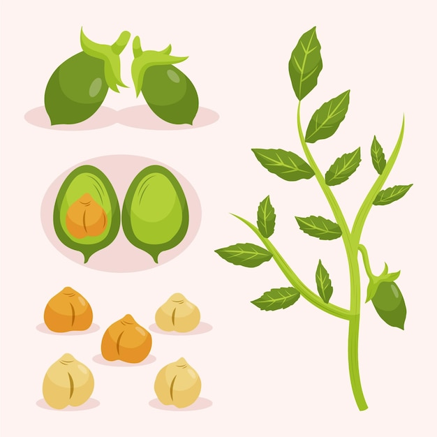 Veggie kikkererwten bonen zaad en plant Gratis Vector