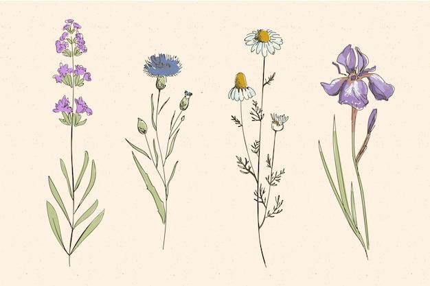 Veld botanisch kruid en wilde bloemen Gratis Vector