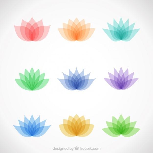 Verscheidenheid van kleurrijke lotusbloemen Gratis Vector