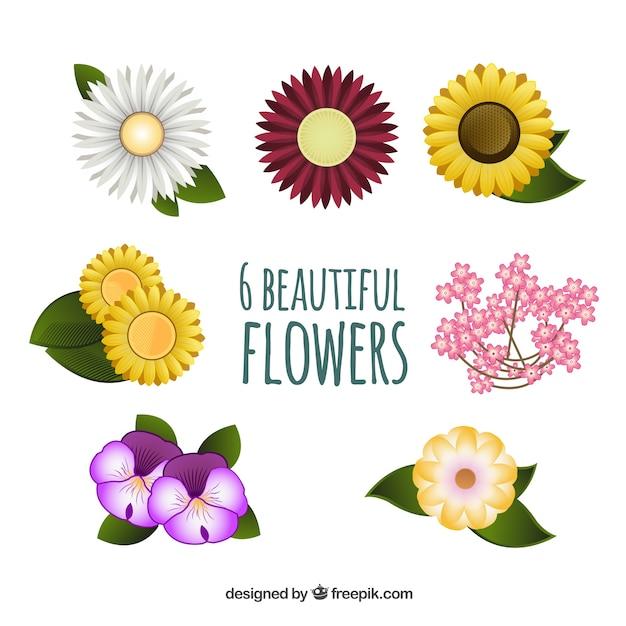 Verscheidenheid van prachtige bloemen Gratis Vector