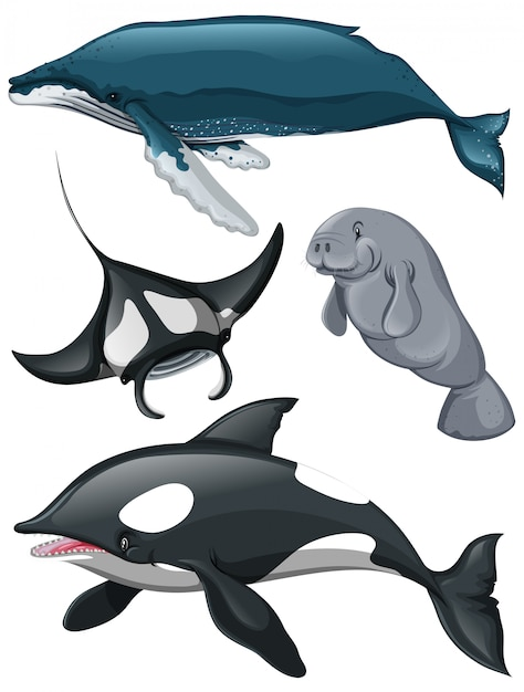 Verschillende soorten walvissen en vissen Premium Vector