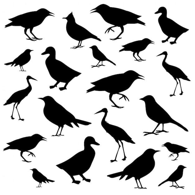 Verschillende vogels pictogrammen silhouetten geïsoleerd Premium Vector