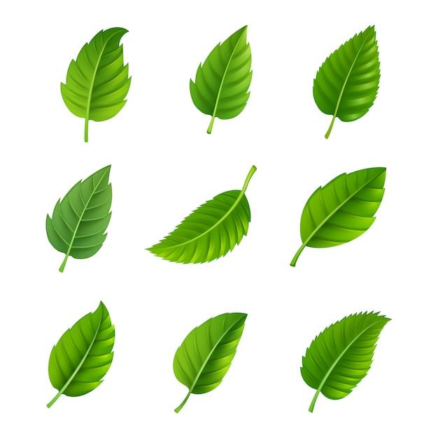 Verschillende vormen en vormen van groene bladeren instellen Gratis Vector