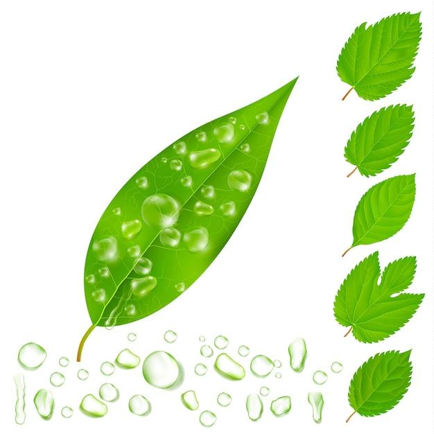 Verse bladeren met geplaatste waterdruppels Gratis Vector