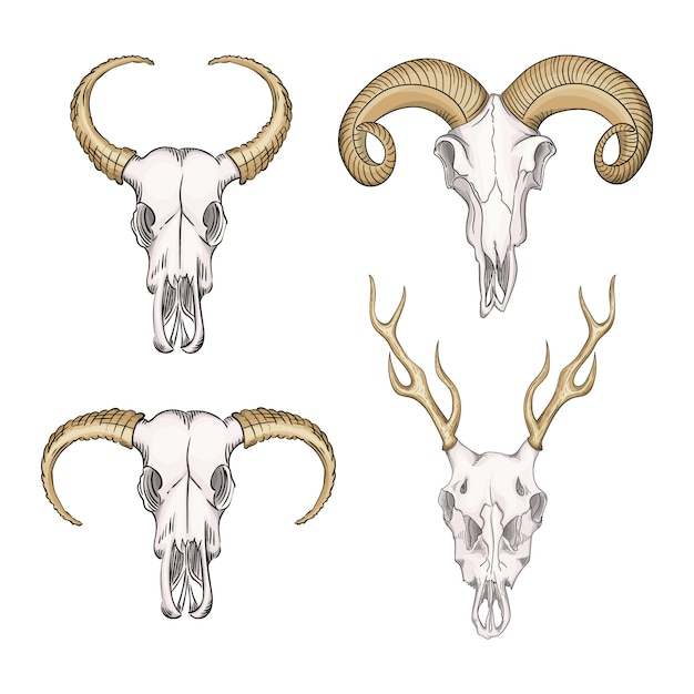 Verzameling schedels van wilde dieren western mystiek. boheemse kop, western vintage dier. Premium Vector