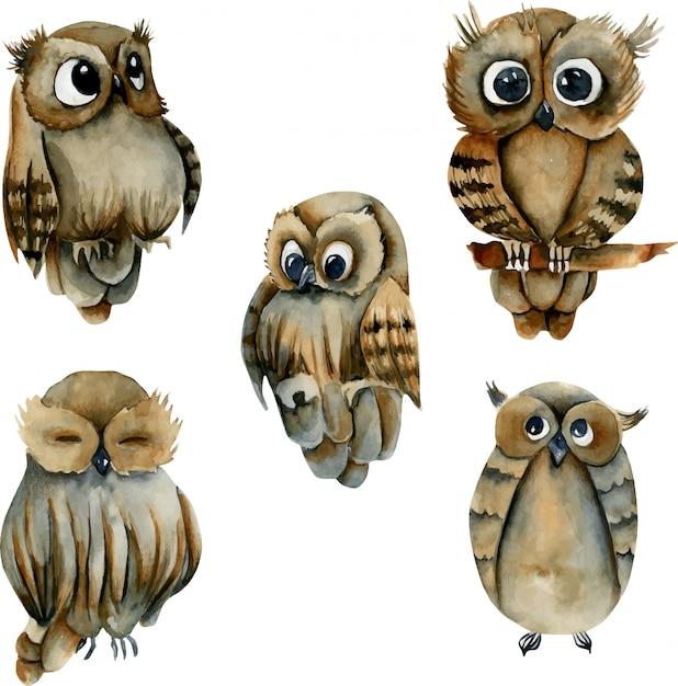 Verzameling van aquarel schattige uilen Premium Vector