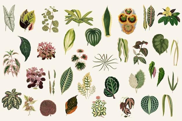 Verzameling van bladeren Gratis Vector