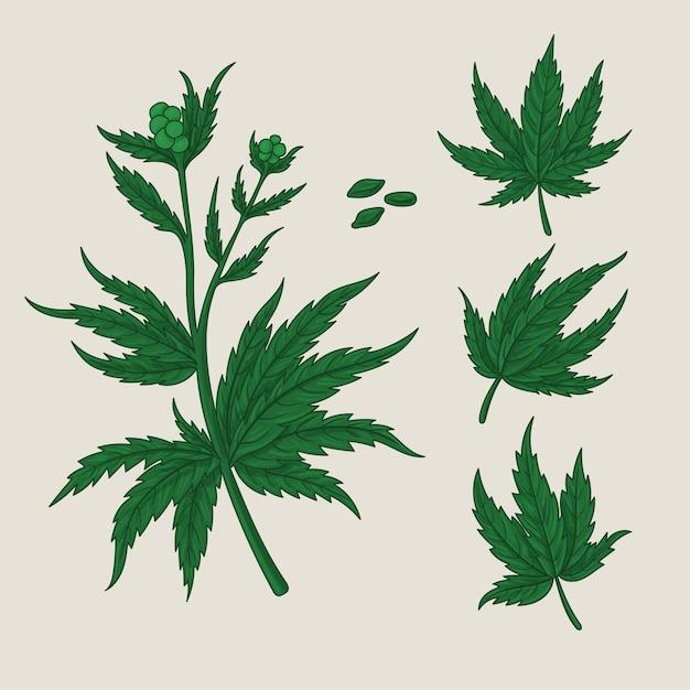 Verzameling van botanische cannabisbladeren Premium Vector