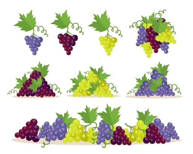 Verzameling van druivensoorten. fruit voor wijnbereiding. Premium Vector