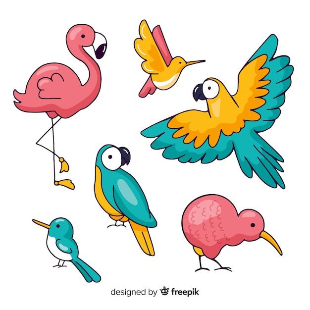 Verzameling van hand getrokken exotische vogel Gratis Vector