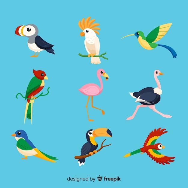 Verzameling van platte exotische vogels Gratis Vector