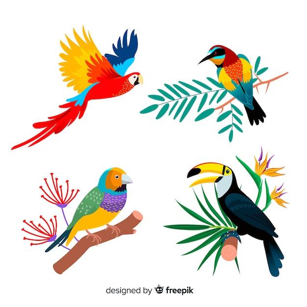Verzameling van platte exotische vogels Premium Vector